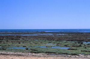 Bei Ebbe lassen sich an den Küsten von Oleron wunderbar Muscheln suchen