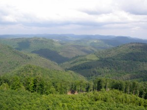 Blick vom Luitpoldturm über den Pfälzer Wald