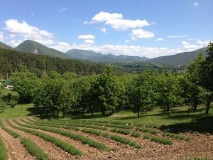 Die Haute Provence rund um Dieulefit