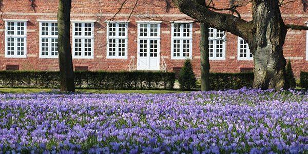 Husum – der Krokusblütenteppich im Schlosspark