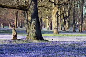 Krokusblüte im Park des Schloss vor Husum