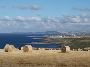 Die Region Banffshire an der Nordsee: Hier wird Gerste für den Whisky angebaut