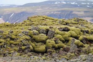 Grün bemoste Lavafelder im Eldhraun