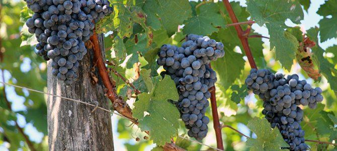 Auf Weinverkostung rund um Pomerol