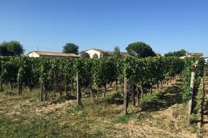 ökologischer Weinanbau rund um Bellegrave