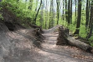 Einst Waldboden - heute ein Mountainbike-Parkour: die Refugien für Wildtiere werden immer kleiner.