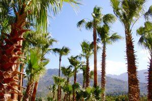 Das Urlaubsparadies Mallorca lockt jedes Jahr Millionen von Touristen an. Foto: Hans-Martin Goede
