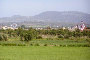 Im etwas flacher geprägten Osten von Mallorca sind die traditionellen Windmühlen sehr präsent. Foto: Hans-Martin Goede