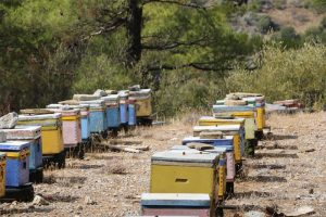 Die Quelle des leckeren kretischen Berghonigs: die bunten Bienenkästen
