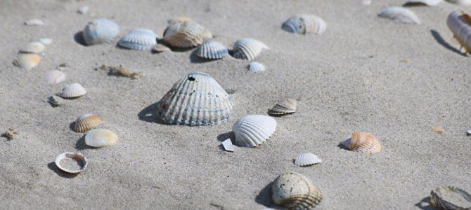 Strandperle der Nordsee: die Insel Amrum