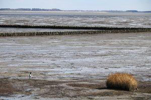 Landgewinnung im Wattenmeer bei Nebel