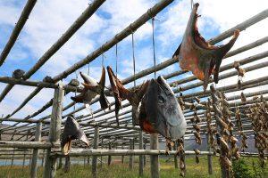 Trockenfischherstellung bei Bakkagerdi auf Island: Isländische Delikatessen und Schmankerl...