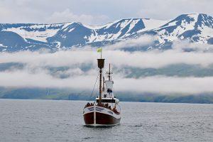 WhaleWachting in der Bucht von Husavik