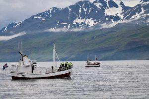 ... und wieder kollektives Warten, bis ein Wal an der Wasseroberfläche zum Luftholen auftaucht....