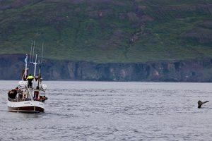 u.a. Husavik lebt inzwischen von den Touristen, die WhaleWachting machen wollen