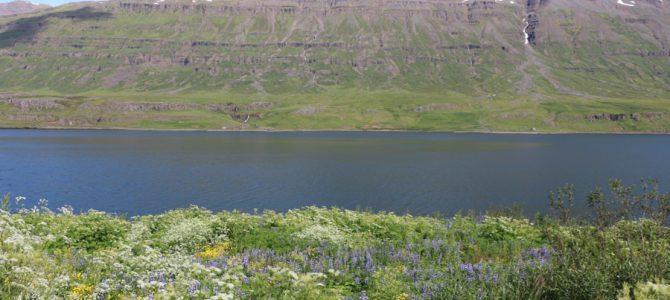 Flora und Fauna auf Island – ein Sommermärchen