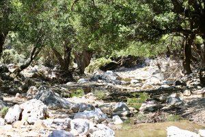 einige Zeit ist nach der Lichtung noch Wasser im Flussbett - doch alsbald versickern die letzten Tropfen
