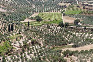 Olivenhaine und Weinfelder rund um Mironas