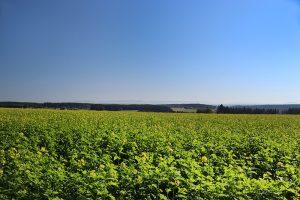 """Oberhalb des """"Mönchhof"""" blickt man über Rottweil hinweg auf die Schwäbische Alb"""
