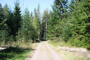 """im Wald des """"Winterberg"""" kreuzen sich die beiden Wanderwege rund um Königsfeld"""