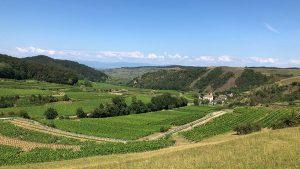 Blick auf Vogtsburg im Kaiserstuhl im Breisgau