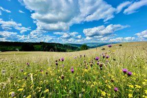 """Naturparadies """"Parc de Ballons des Vosges"""""""